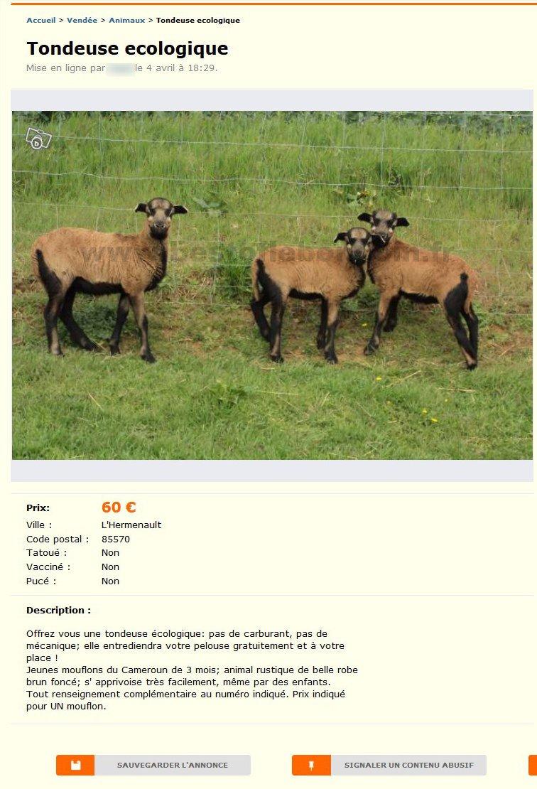 Tondeuse Ecologique Animaux Pays De La Loire Best Of