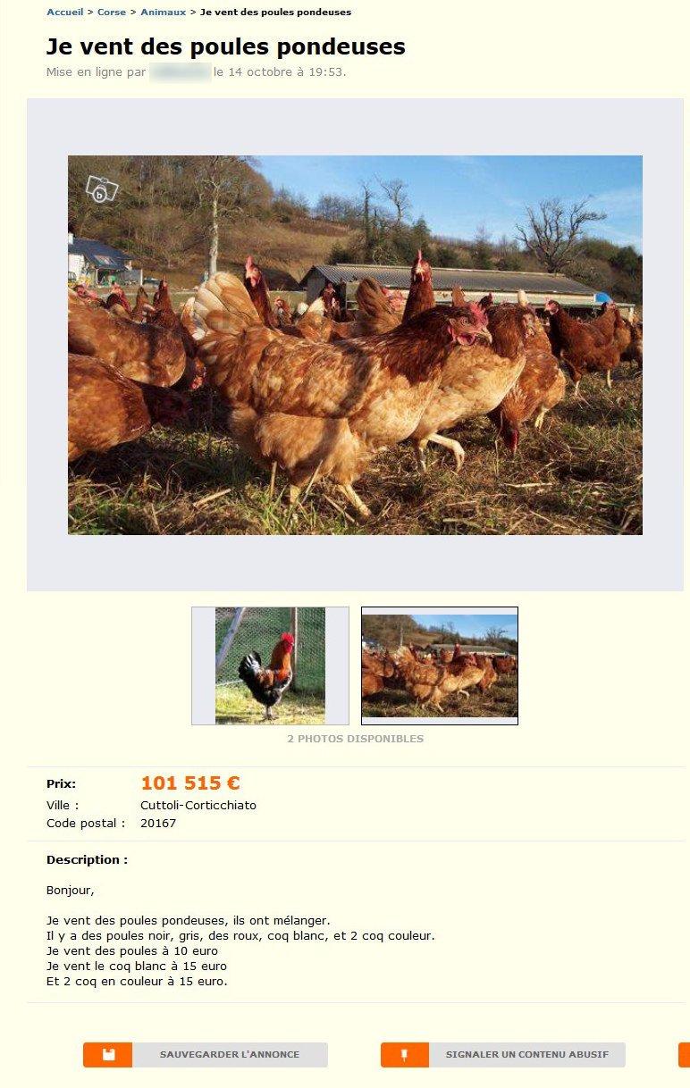 Je vent des poules pondeuses animaux corse best of for Top 10 des poules pondeuses